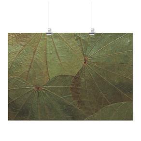 Pôster - Folhas Verde 2